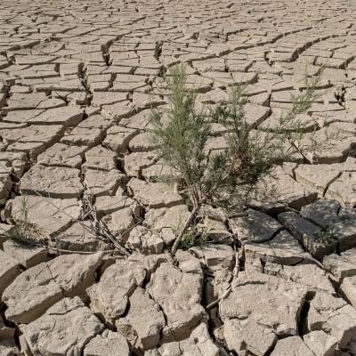 Humanidad tiene 12 años para evitar desastre ambiental, advierte la ONU