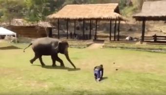Video Elefante Defiende A Cuidador, Elefante Defiende, Ataque Elefante, Elefantes, Tailandia, Cuidador