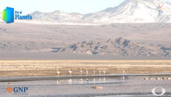 Lagunas que atraen flamencos, espejos de Atacama