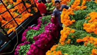 Productores siembran más de 250 hectáreas de flor de cempasúchil
