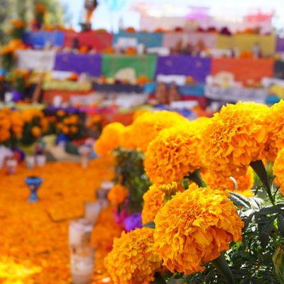 Todo lo que hay que saber sobre las tradicionales flores de cempasúchil