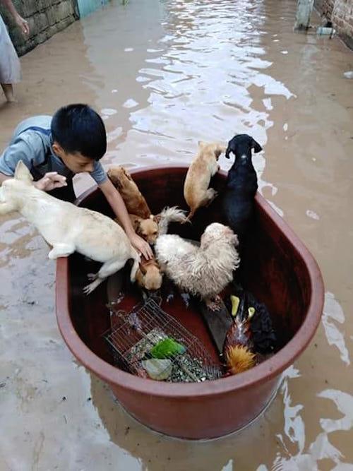 Niña Salva Mascotas Tina Huracán Willa