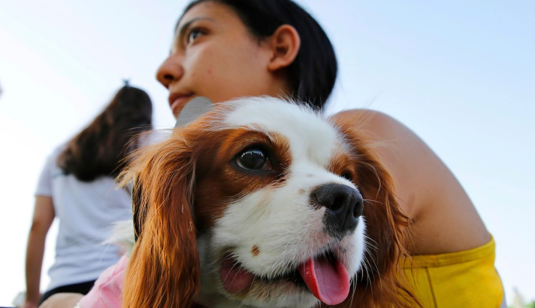 Mascotas Recibir Herencia Congreso CDMX Diputado