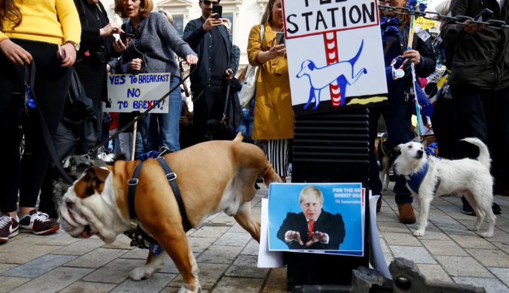 brexit mascotas participan en wooferendum por segunda consulta
