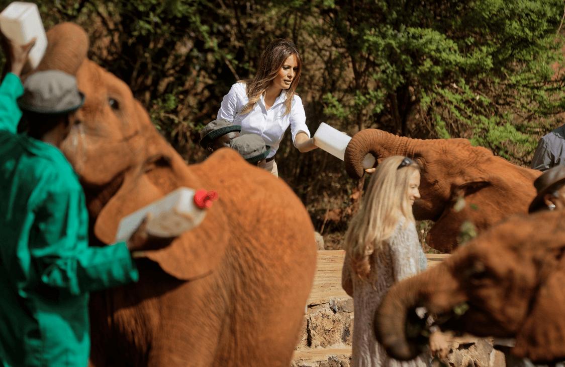 Melania Trump fue fuertemente golpeada por elefante africano
