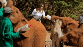 Melania Trump alimenta elefantes en Kenia y uno la empuja