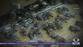 Población de abejas disminuye 20% a nivel mundial