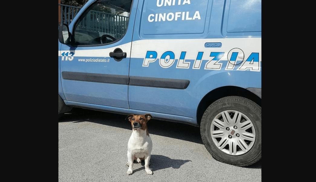 Mafia Recompensa Cabeza Perro Policía Pocho
