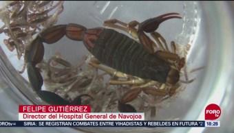 Por calor aumentan picaduras de animales ponzoñosos en Sonora
