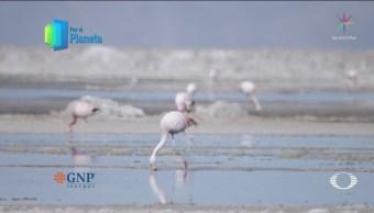 Por El Planeta Reserva Nacional De Flamencos Chile