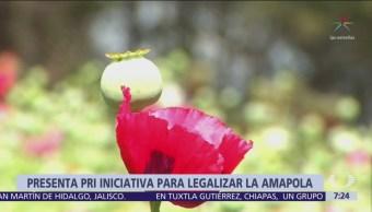 PRI presenta iniciativa en el Senado para legalizar amapola