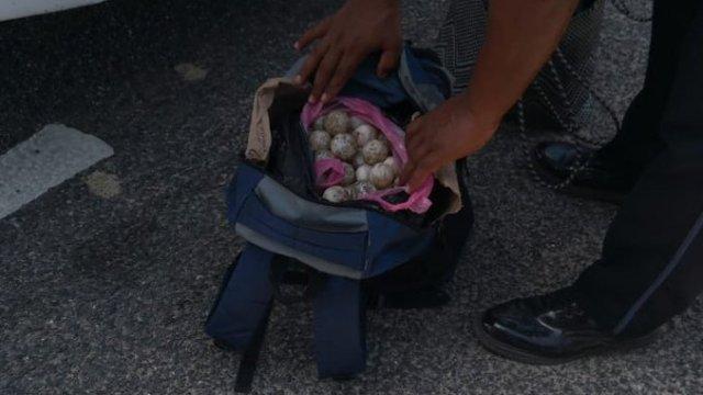 Mil huevos de tortuga golfina son asegurados en Oaxaca