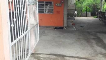 Sicarios asesinan a perrito que cuidaba una casa