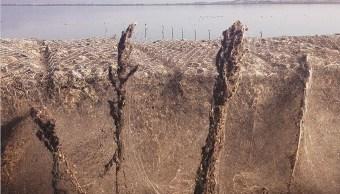 Telaraña gigante cubre miles de metros en playa de Grecia