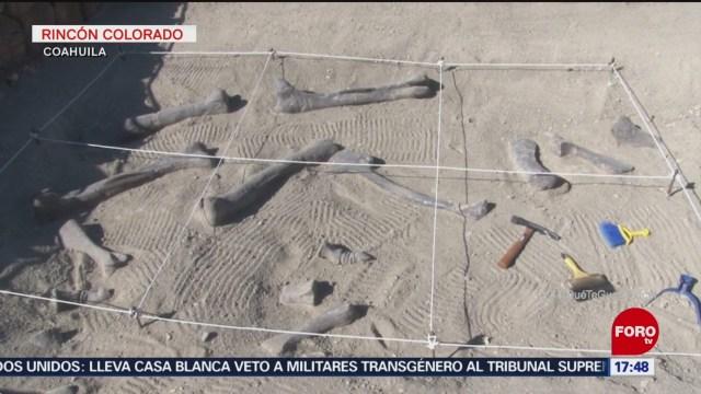 Zona Paleontológica Coahuila Municipio De General Cepeda, Coahuila Rincón Colorado Organismos Fósiles Zona Paleontológica Rincón Colorado