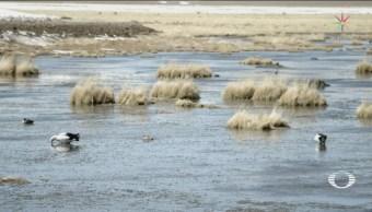 Atacama: Lluvias Matan Microbiota Desierto Seco Mundo