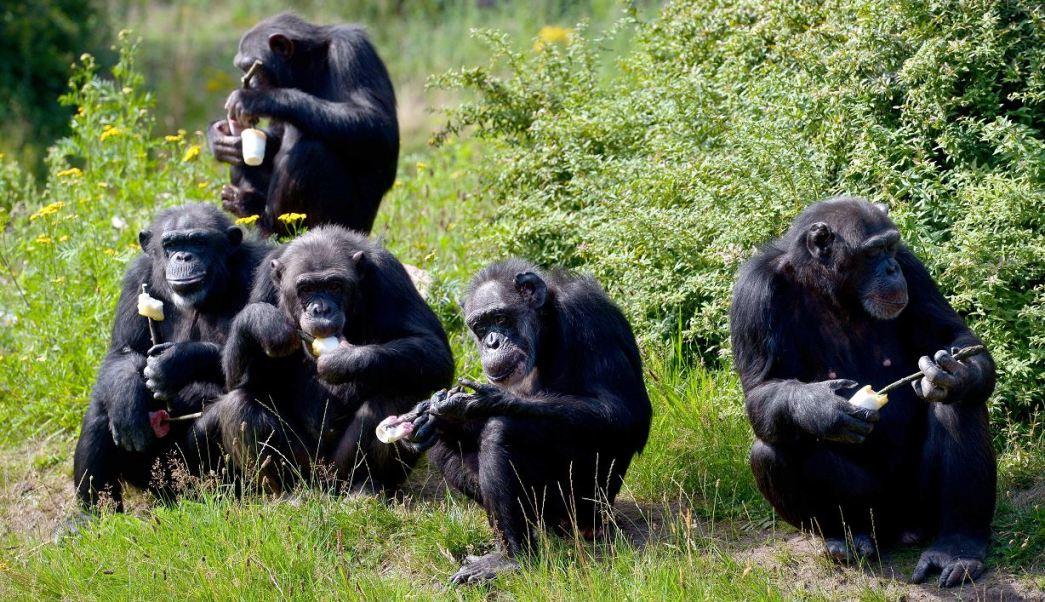 Qué especies dominarán la Tierra si se extingue la humanidad