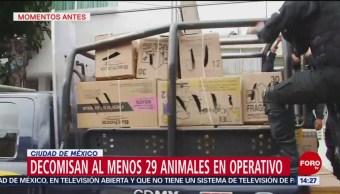 Decomisan 29 animales durante operativo en la colonia Portales