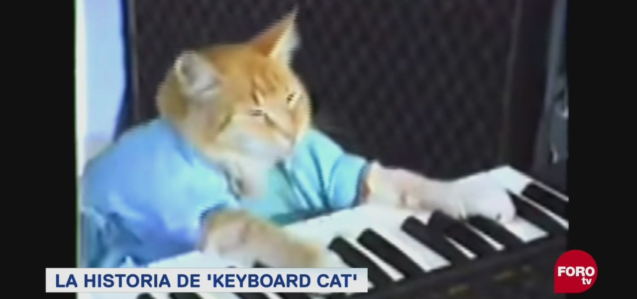 El Famoso Meme Keyboard Cat Famosas Imágenes Internet Meme Que Lo Inició Todo