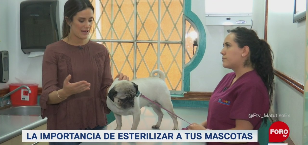 ¿Es recomendable esterilizar a las mascotas?