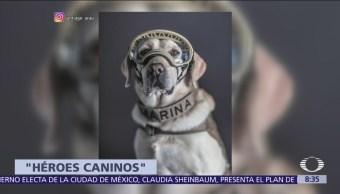 Fotos de los perros rescatistas del 19-S