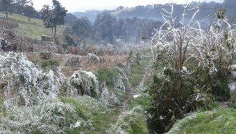 Frente frío 10 afecta producción de café en Misantla