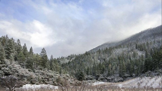 Frente frío provoca temperaturas de menos 11 grados en Arteaga, Coahuila