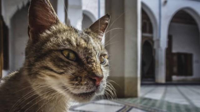Hombre muere de rabia por mordida de un gato en Marruecos