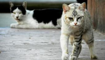 imagen-ilustrativa-gatos-ferales-hombre-tiene-100-gatos-argentina-chubut