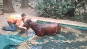 incendio-california-2018-caballo-naturaleza-animales