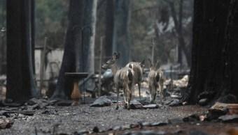 Sube a 83 el número de muertos en incendios de California