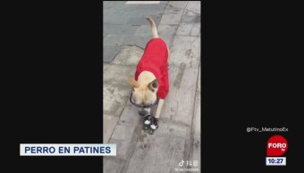#LoViralDeLaSemana: Perro en patines