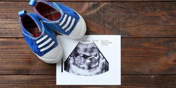 maternidad subrogada si es opcion para pareja homosexual scjn