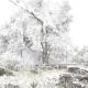 Frente frío provoca intensas nevadas en sierra de Querétaro