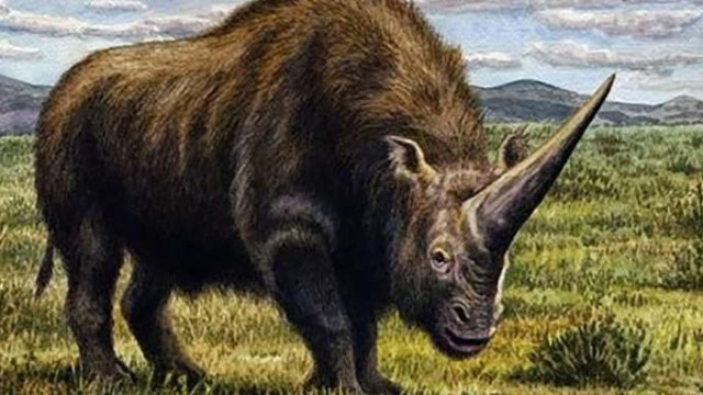 Unicornio siberiano se extinguió por el cambio climático