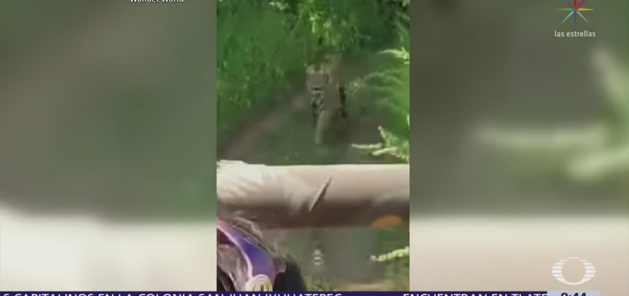 Tigre persigue a turistas durante safari en India