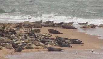 video-turistas-tomando-fotos-estampida-focas