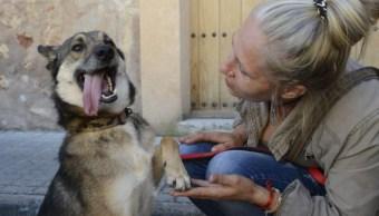 El rescate de Wolfi, un perro violado y víctima de zoofilia en España