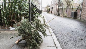 arbol-navidad-natural-abandonado