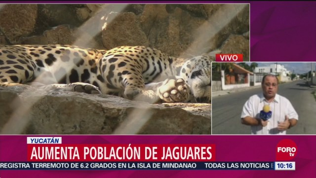 Aumenta la población de jaguares en México
