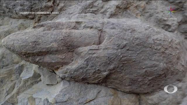 Investigadores de la Universidad de Cambridge descubrieron docenas de huellas de dinosaurios de al menos 100 millones de años de antigüedad en Inglaterra