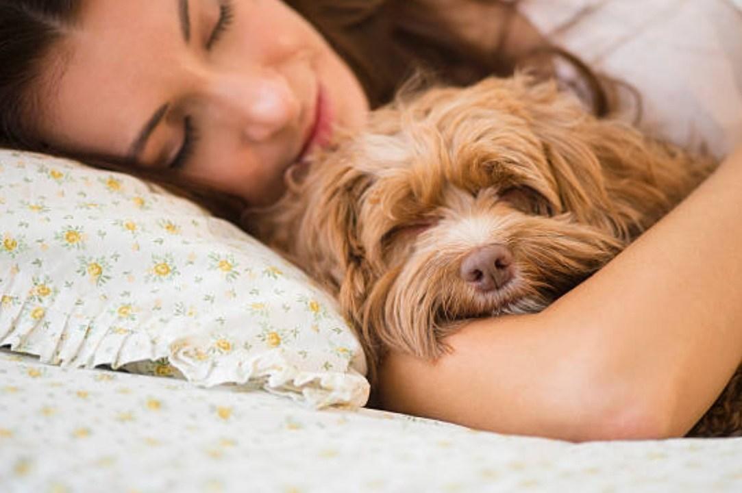 El perro es el mejor compañero de una mujer para dormir, no el hombre