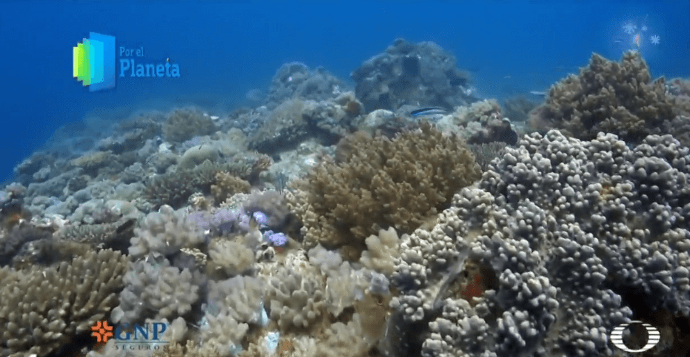 Corales en la Isla Vamizi, Mozambique. (Noticieros Televisa)