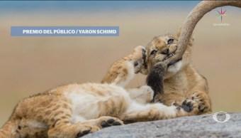Imágenes Ganadoras National Geographic 2018 Fotogarfía
