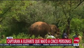 India captura elefante salvaje que mató a cuatro personas