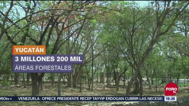 Indígenas mayas inician la reforestación de la selva yucateca con árboles maderables; quieren sembrar 250 mil plantas en una primera etapa