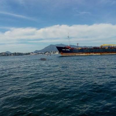 Rescatan a ballena herida por arte de pesca en Colima