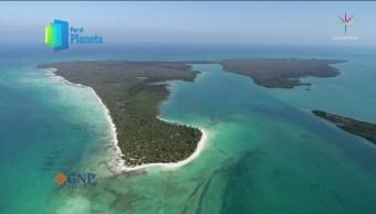 Vida marina en Isla Vamizi, cuna de los jardines del mar