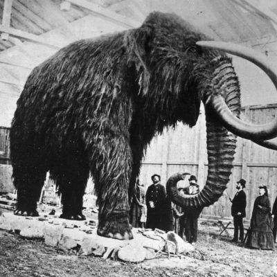 Los mamuts tenían sangre