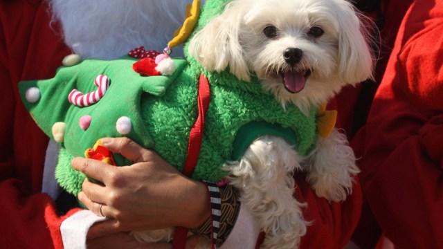 Arranca Festival Navideño Adopciones mascotas CDMX